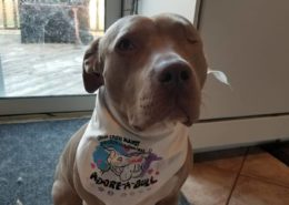 Home | BULLIES IN NEED DOG RESCUE